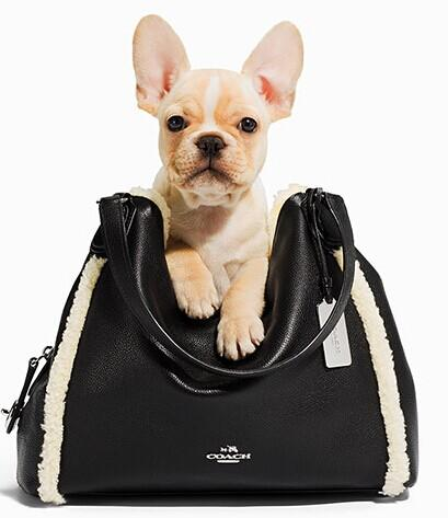 25% Off COACH  Rhyder Shearling and Leather Handbags @ Lord & Taylor