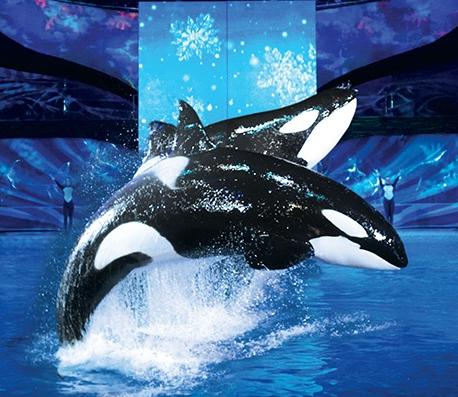 Single-Day Admission for an Adult or Child to SeaWorld San Antonio's Christmas Celebration @ Groupon