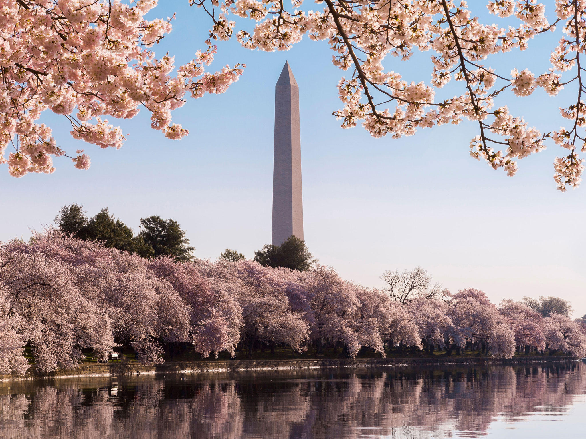 From $106 Visit National Cherry Blossom festival in Washington DC. @ Hilton Hotels