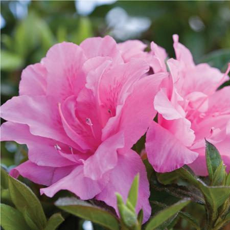 Up to 50% Off Select Plants on Sale @ Walmart