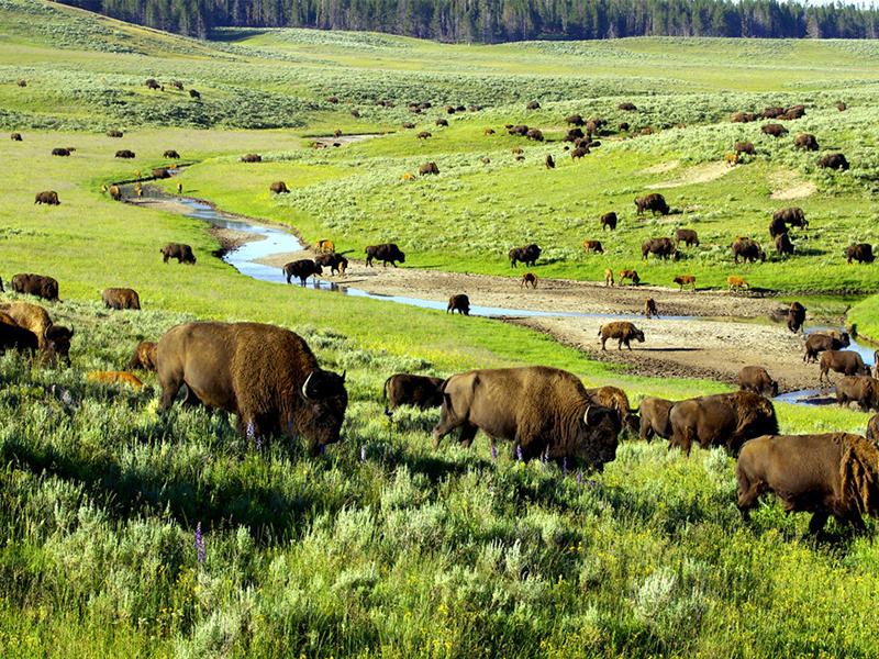 Dealmoon Exclusive! Up to 25% OFF 2016 Yellowstone Tour Packages Sale @ Usitrip.com