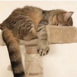 Amazon Cat Tree Furniture Collection