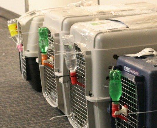 出境动物检验检疫局 - 美国,加拿大出境可省略(以下步骤基本