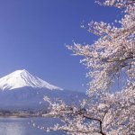 8-Day Japan Cherry Blossom Spring Tour Package