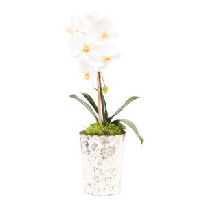 Made In India Faux Orchids - Home - T.J.Maxx