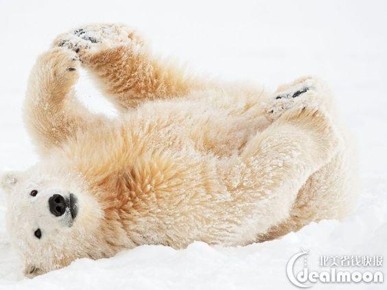 它是欧洲动物园协会公认的会员之一,园内提供一年四季观看北极动物的