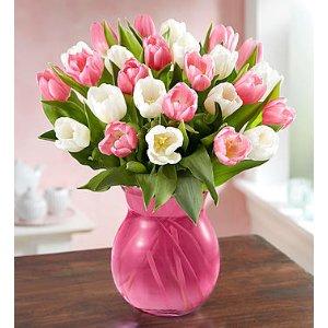 Sweet Spring Tulips 甜蜜春季郁金香