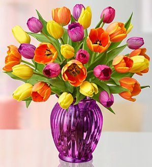 Only $30!30 Beautiful Spring Tulips @ 1-800-Flowers.com