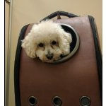 Texsens Innovative Traveler Bubble Backpack Pet Carriers for Cats and Dogs @ Amazon.com
