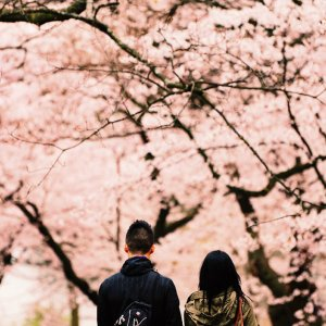 Exclusive offer!Cherry Blossom Tour starts at $48Globerouter.com announces it's Spring Break Travel Sale