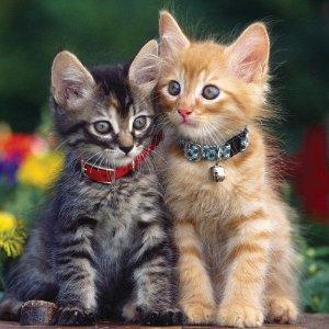 Lowest price $4.49 (Orig$9.37)Catit Nylon Adjustable Cat Collar