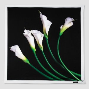 Women's Calla Lily Black Scarf with White Trim - Victoria Beckham for Target