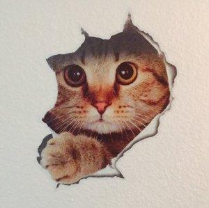 98起 可爱猫咪装饰壁纸