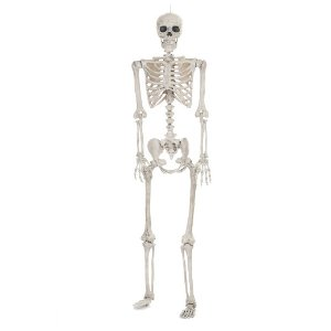 Halloween Lifesize Posable Skeleton - Hyde and Eek! Boutique™
