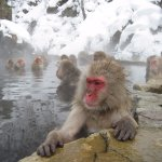 多伦多周边冬季泡温泉指南