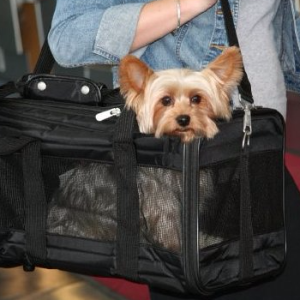 Sherpa Deluxe Pet Carriers 中码