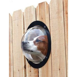 PetPeek Fence Window for Pets : Pet Window Perches
