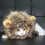闪购:Dogloveit 万圣节宠物狮子鬃毛假发