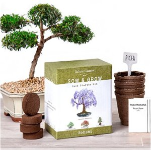 Lightning dealNature's Blossom Bonsai Tree Seed Starter Kit