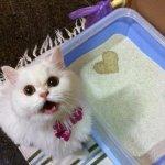 40lb Precious Cat Litter - various retailers