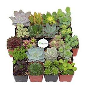 $31.99Shop Succulents Unique Succulent (Collection of 20)