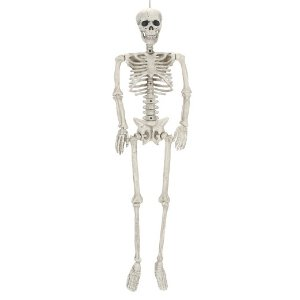 Halloween Posable Skeleton Medium - Hyde and Eek! Boutique™