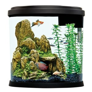 Top Fin 3.5 Gallon Enchant Aquarium