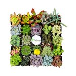 Set of 20 Succulents @ Zulily