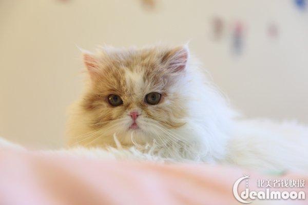 全为我家小可爱砂糖君~高颜值猫咪总算找到了他最爱