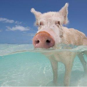 From $549The Bahamas: 3-Nt Beach Trip w/Air