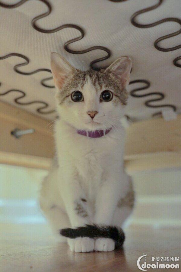 萌猫蠢狗养成记:宠物领养及饲养心得