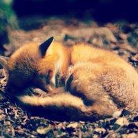 小狐狸OoO尾巴