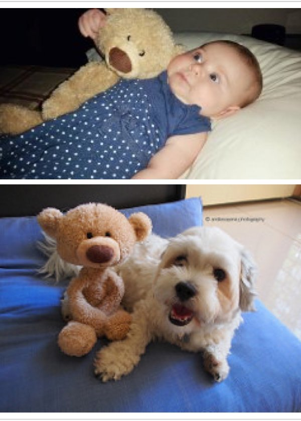 GUND Toothpick Teddy Bear Stuffed Animal New