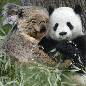 2分钟搞定!持中国护照赴澳大利亚可自助通关!留学生签证也将全面简化!