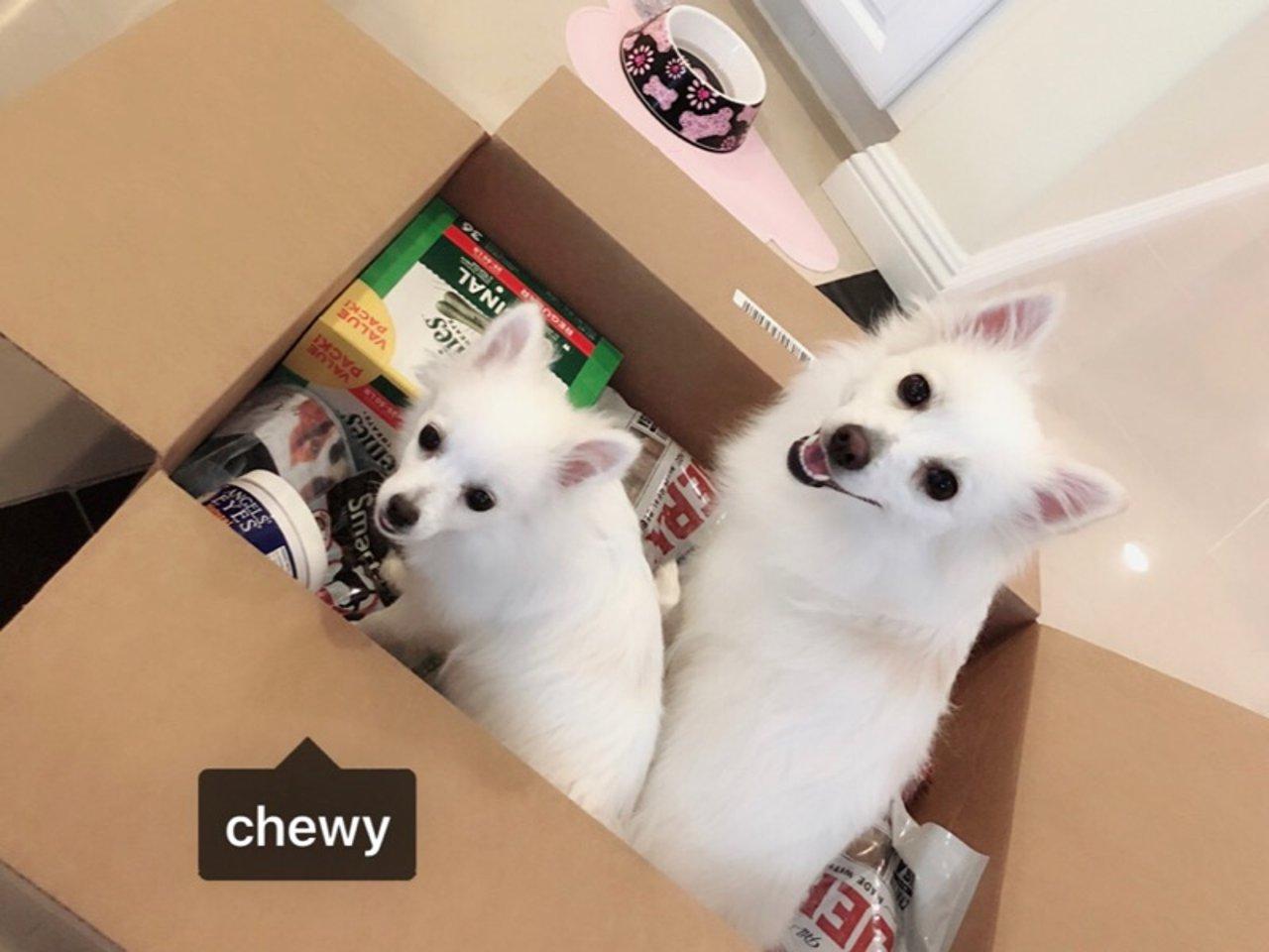 家有狗宝🐶宠物用品大搜罗| Chewy海量好货大推荐(二)