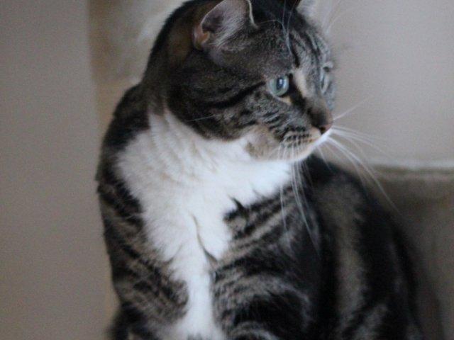 猫砂盆怎么选?