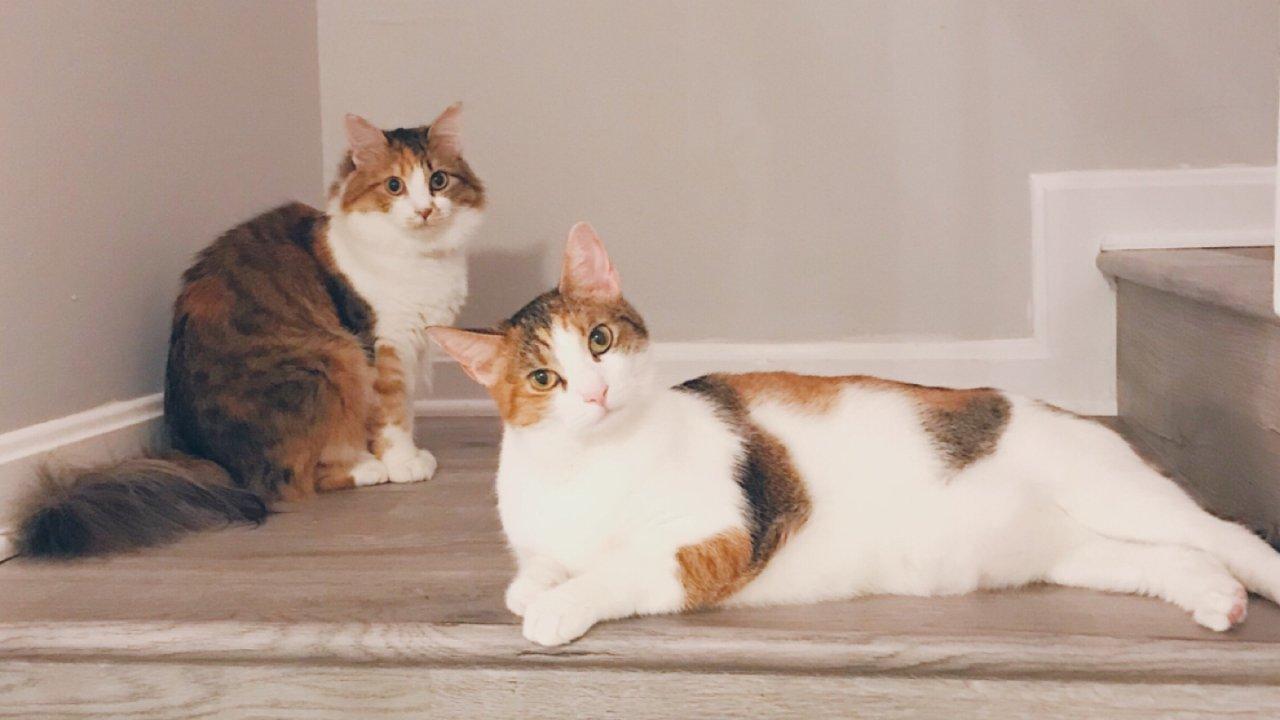 如何帮家里的猫主子挑选适合的猫碗