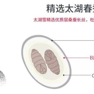 打造专属丝绸生活方式|太湖雪(THXSILK)真丝床上用品,懂丝绸,更懂生活~