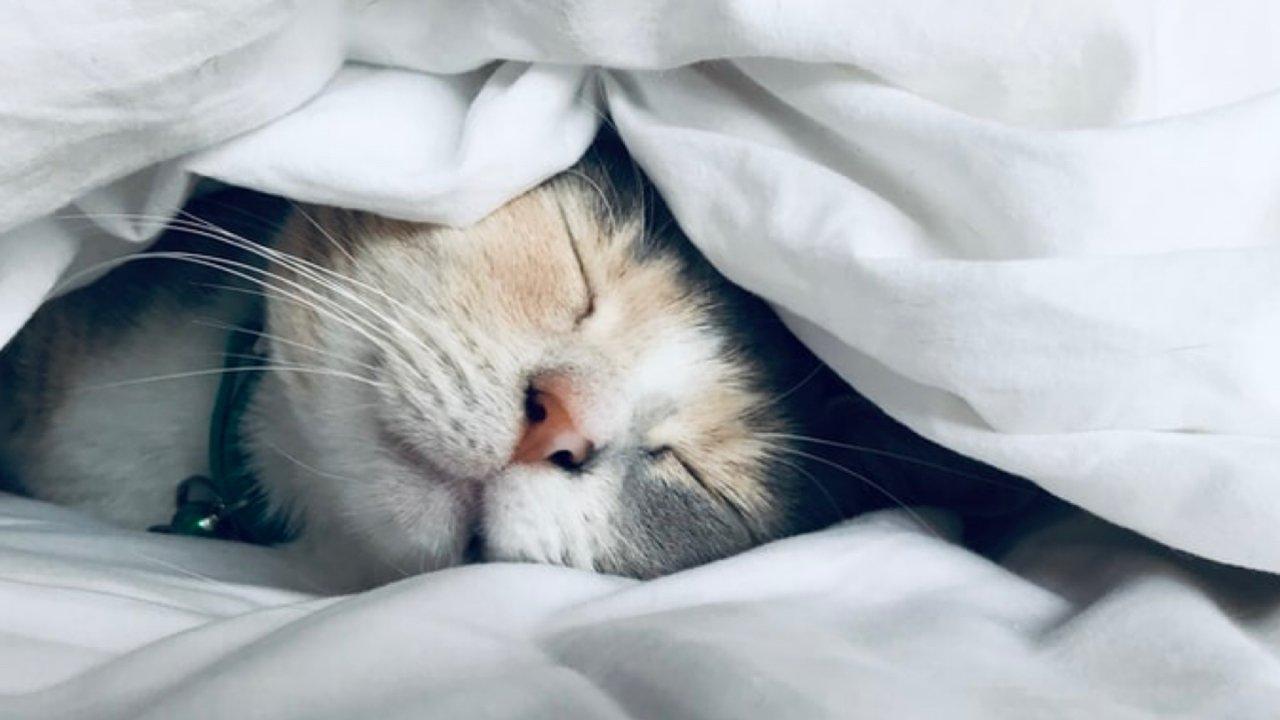 失眠的你或许可以试试这三种方法