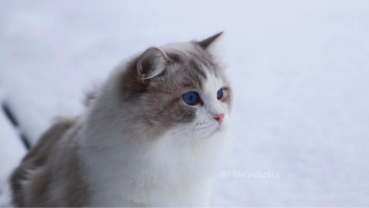 【铲屎官必备】猫咪看病&保险指南