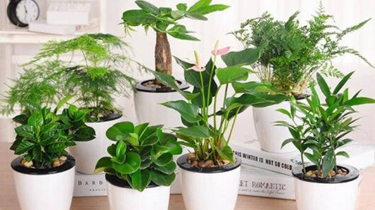轻松两招,消除室内绿植虫害(纯植物🌿,无毒害)