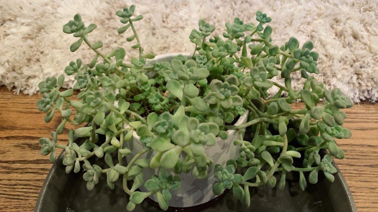 怎样拥有绿手指 家里养植物小技巧