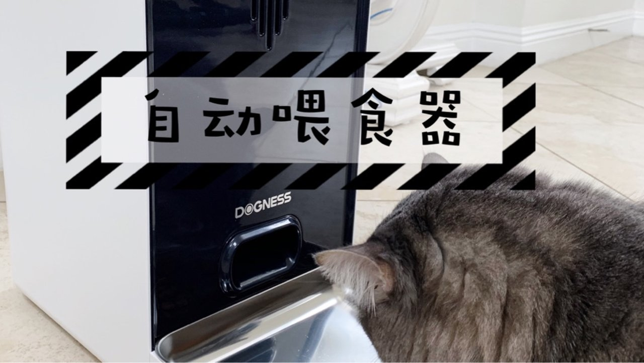 """【解放双手】自动喂食+自带摄像头讲话""""监视""""喵们💕"""