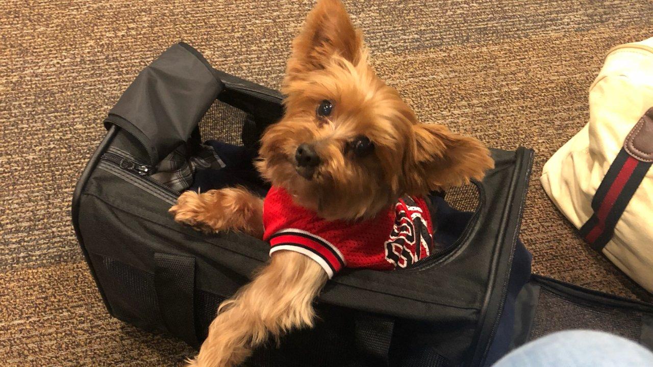 北京机场宠物免隔离啦!带狗狗从洛杉矶回国攻略!