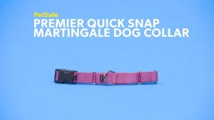 PetSafe Premier Quick Snap Martingale Dog Collar, Deep Purple, Small, 3/4-in - Chewy.com