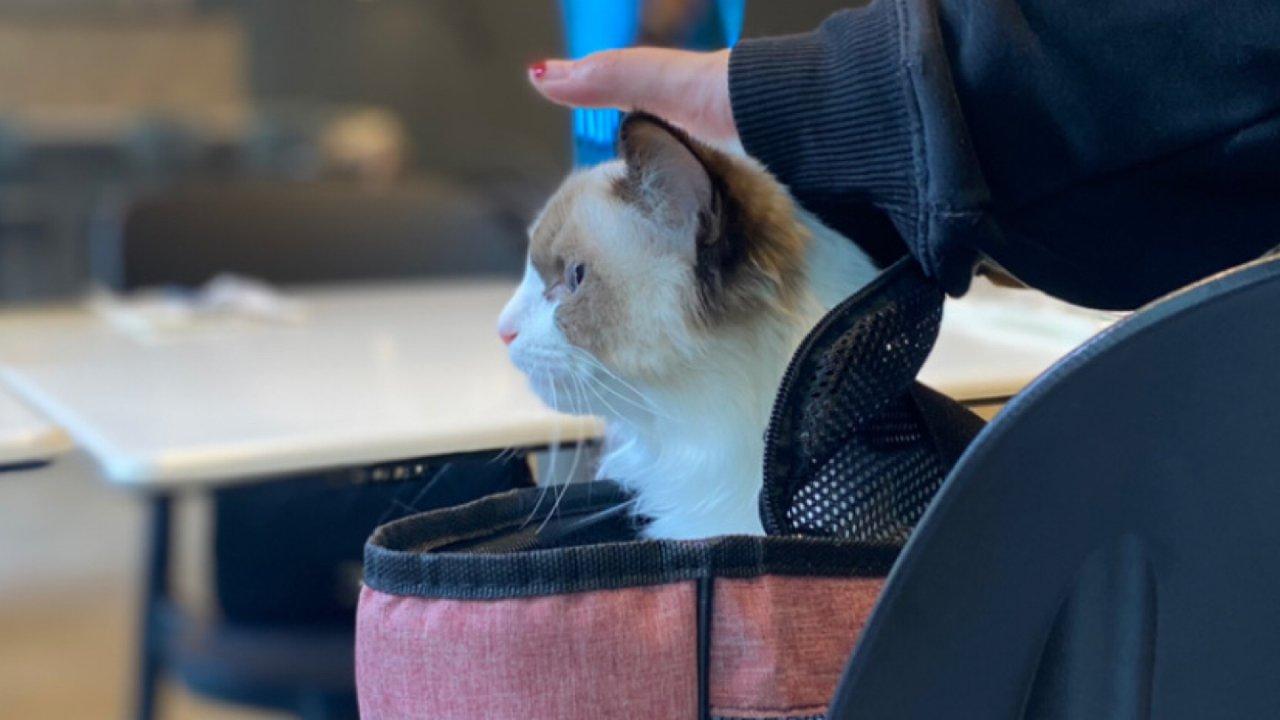 连小猫咪都超喜欢的韩式工业风brunch 🥐