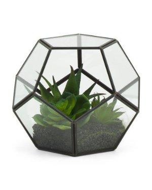 5.5in Succulent In Glass Terrarium   Home Accents   Marshalls