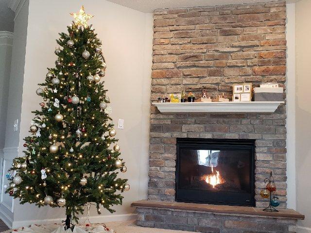 手把手教你如何选择和装饰圣诞树🎄
