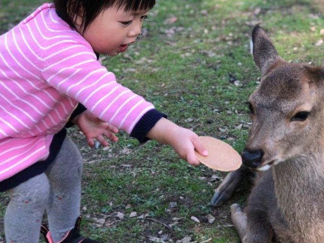 奈良喂鹿🦌·京都👘神社⛩️留影·大...