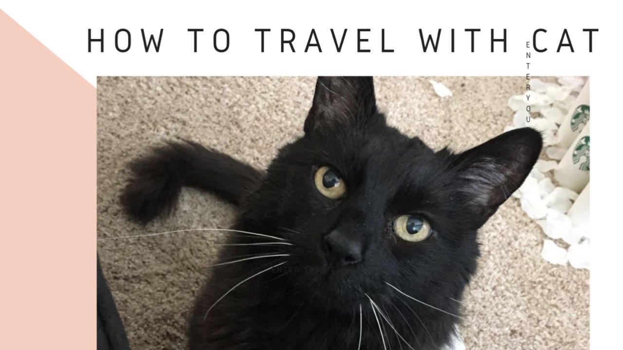如何带着猫咪一起旅行(训练过程及方式推荐)